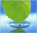 Уход за растениями с помощью серебряной воды | АкТилайн | Тилайн