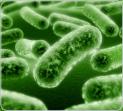 Опасные микробы и бытовая химия